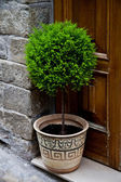 Old entrance door and plant — Stock Photo