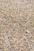 Bir plaj çakıl — Stok fotoğraf