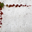 Ivy leaves frame on wall — Stock Photo #28361951