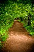 Mystical alley through dark forest — Stock Photo