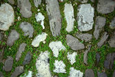 Cobbles with moss on a pavement — Stock Photo