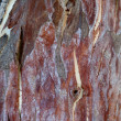 Sycamore tree texture — Stock Photo