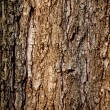 Old tree texture — Stock Photo #31962545