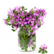 Wild violet flowers in glass jar — Stock Photo #31962859
