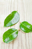 Three green wet leaves — Stock Photo