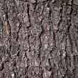 Old tree texture — Stock Photo #33044581
