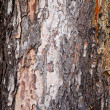 Old tree texture — Stock Photo #33044731