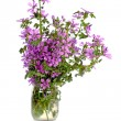 Wild violet flowers in glass jar — Stock Photo