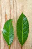 Two green leaves — Stock Photo