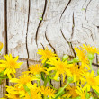 Yellow flowers on wooden background — Stock Photo