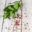 Stock Photo: Twig of fresh laurel and peppercorns