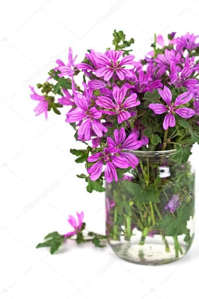 wild violet blumen in glas — stockfoto © marylooo #33274217, Best garten ideen