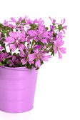 Wild violet flowers in bucket — Stock Photo