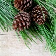 Christmas fir tree with pinecones — Stock Photo