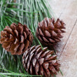 Christmas fir tree with pinecones — Stock Photo #34260447