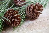 Vánoční strom jedle s šiškami — Stock fotografie