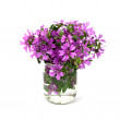 Wild violet flowers in glass jar — Stock Photo #34380329