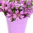 Wild violet flowers in bucket — Stock Photo #34620091