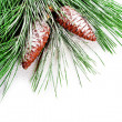 Fir tree branch with pinecones — Stock Photo #35347251