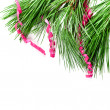 Fir tree branch with serpentine  — Stock Photo