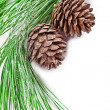 Foto Stock: Fir tree branch with pine cones