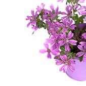 Wild violet flowers in bucket — Stock Photo