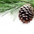 Fir tree branch with pinecone  — Foto de Stock