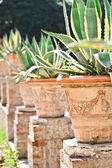 Cactos em um jardim tropical — Foto Stock