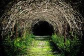 Tunel hroznové poboček — Stock fotografie