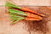 Fresh carrots bunch — Stockfoto
