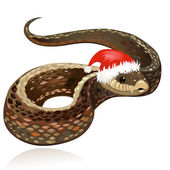 Beautiful snake in santa hat — Stock Vector