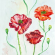 Watercolor poppies — Stock Photo