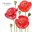 Bouquet of red poppies for your design — Stock Vector