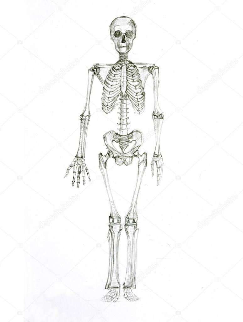 Esqueleto Dibujo a Lapiz Dibujo a Lápiz un Esqueleto