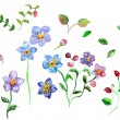 Watercolor Field flowers — Stock Photo