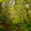 Summer forest landscape — Stock Photo