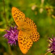 Stock Photo: Beautiful yellow butterfly