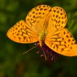 Beautiful yellow butterfly — Stock Photo