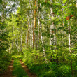 Summer forest landscape — Stockfoto