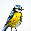Watercolor drawing of cute bird — Stock Photo #31045431