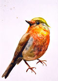 Watercolor drawing of cute bird — Stock Photo