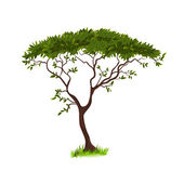 Beautiful tree for your design — Vector de stock
