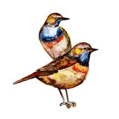 Cute birds for your design. watercolor — Stock Vector