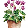 Home flowers in a vase. watercolor — Stock Photo #43539637
