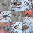 Collection of small birds in winter time. sparrow, titmouse, bul — Stock Photo