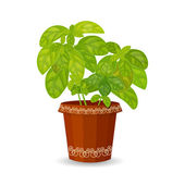 Basil in flower pot — Stock Vector