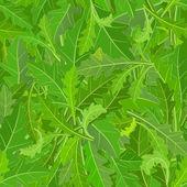 Leaf arugula texture — ストックベクタ