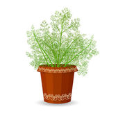 Dill in flower pot — Stock Vector