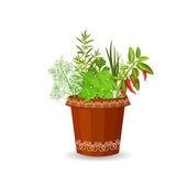 Herbs and hot pepper — Cтоковый вектор