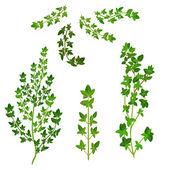 Bunch fresh herbs — Stock Vector